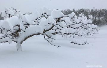 Kanpa-Niigata-snow-01