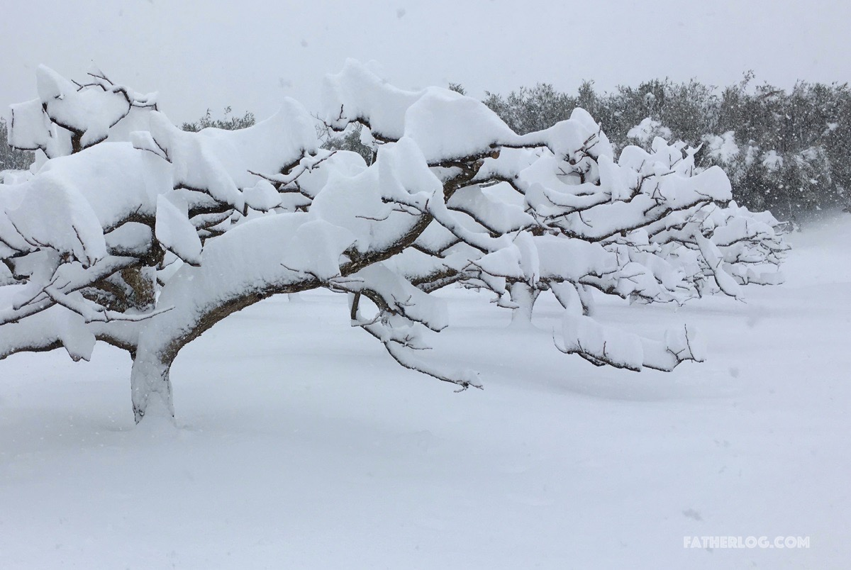 最強寒波の雪が新潟県に残した爪跡まとめ!電車・道路といった各交通機関が完全マヒ状態で地獄絵図